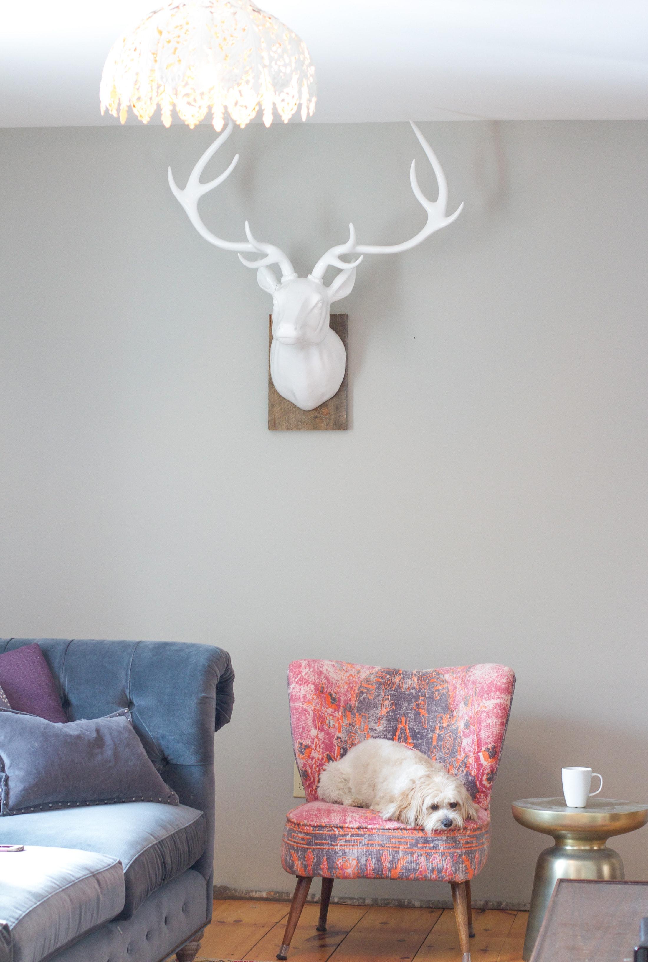 interios decor, ski house decor