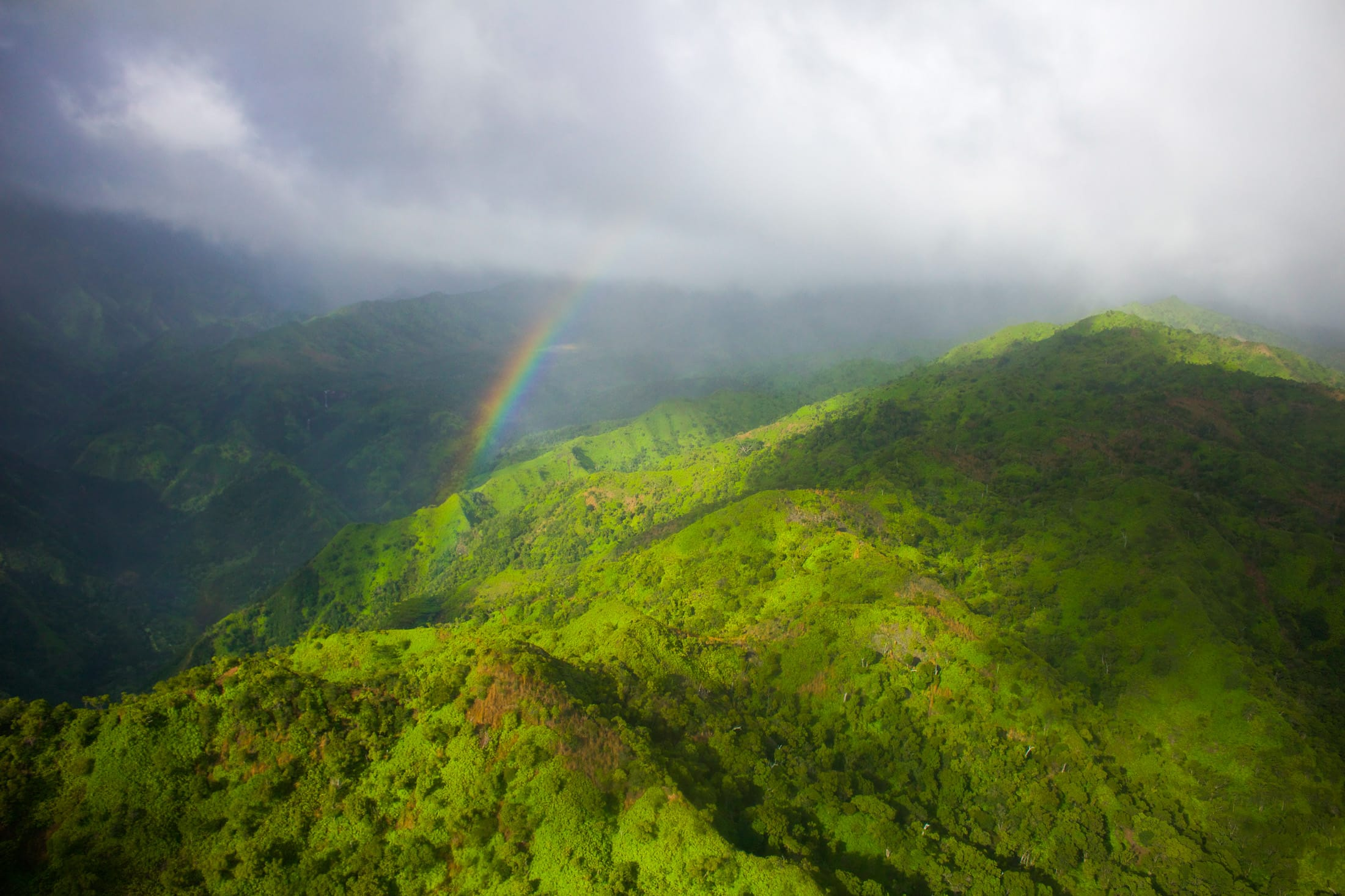 lush green kauai