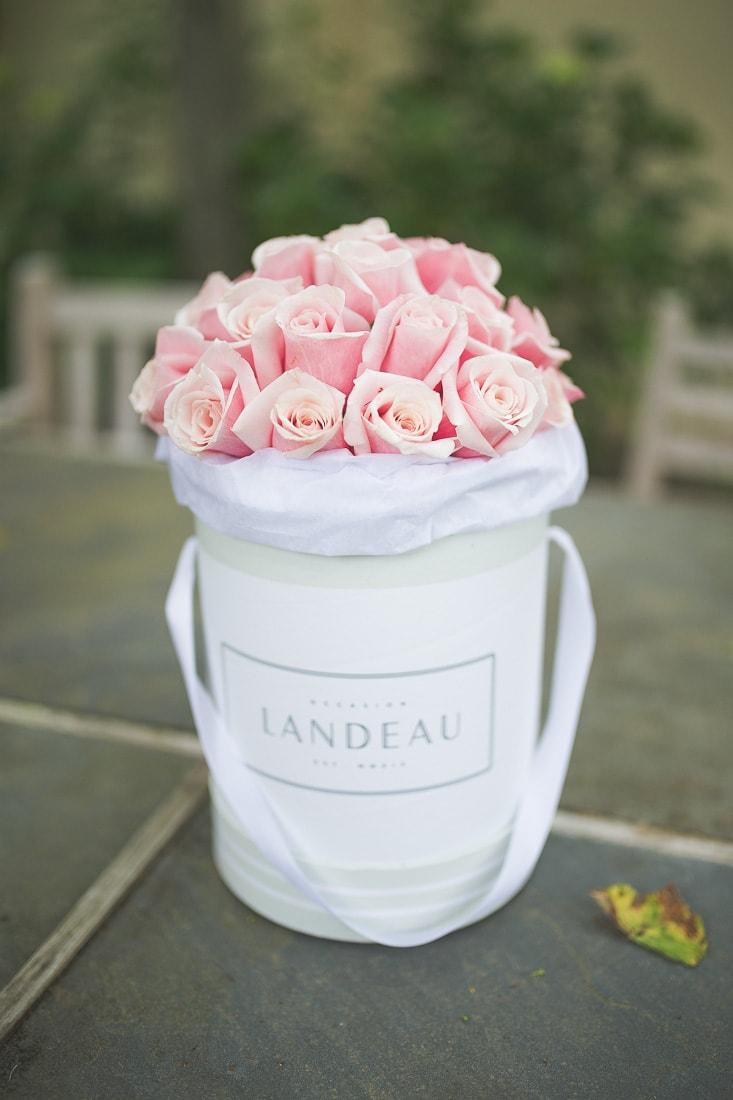 landeau roses, pink roses