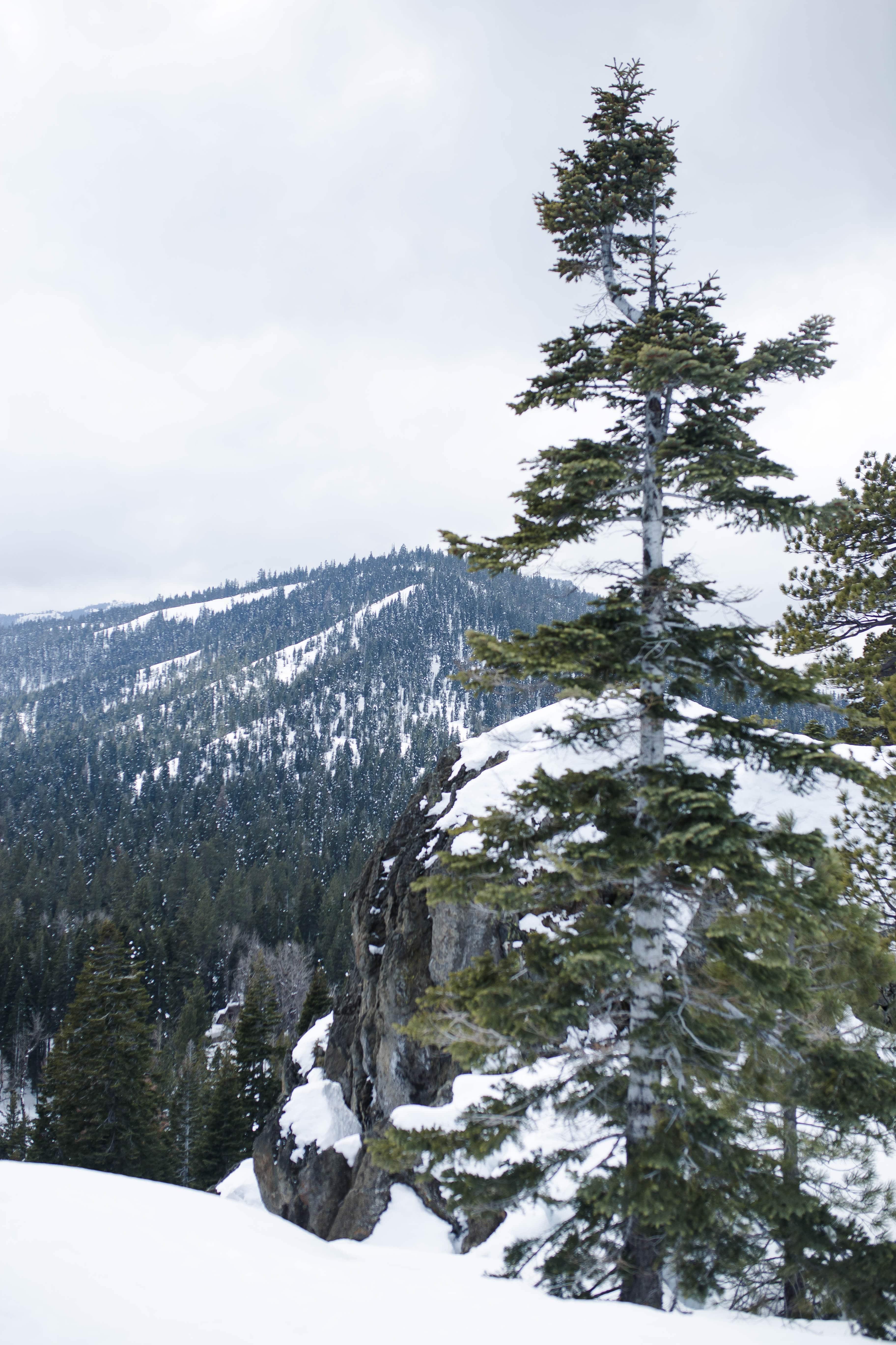 West Coast Winter