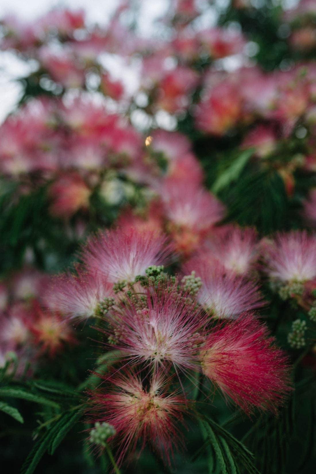 Fire Island Flowers