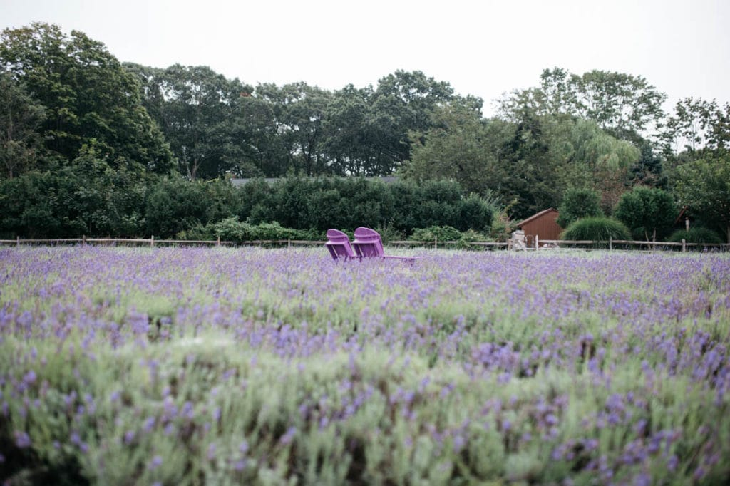 Greenport Lavender Farm