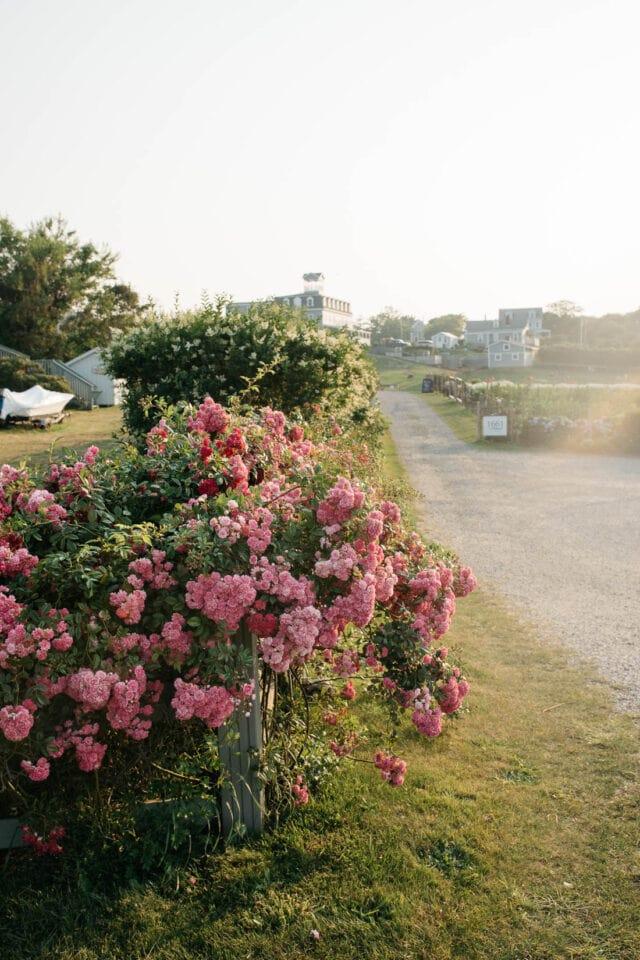 1661 Farm & Gardens